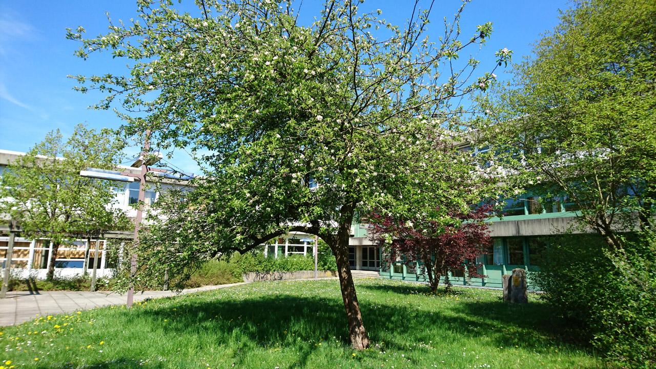 RWS-Baum-1280x720